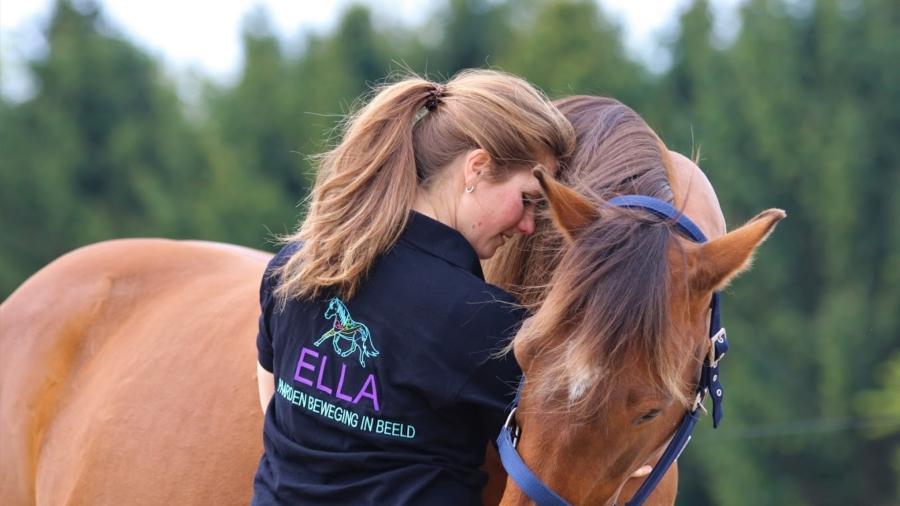 Paard en Beweging in beeld